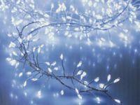 Vorschau: LED-Büschellichterkette Silberdraht, kaltweiß, 240 LEDs, 230V~, IP44, 7,4m