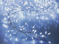 Vorschau: LED-Büschellichterkette Silberdraht, 100 LEDs, kaltweiß, Batteriebetrieb