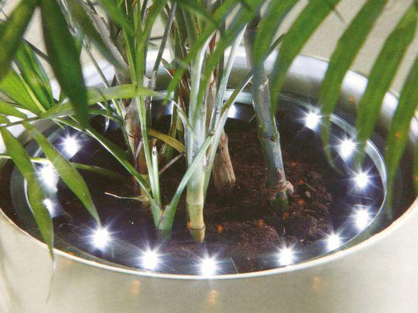 Pflanzen-Beleuchtung, LED