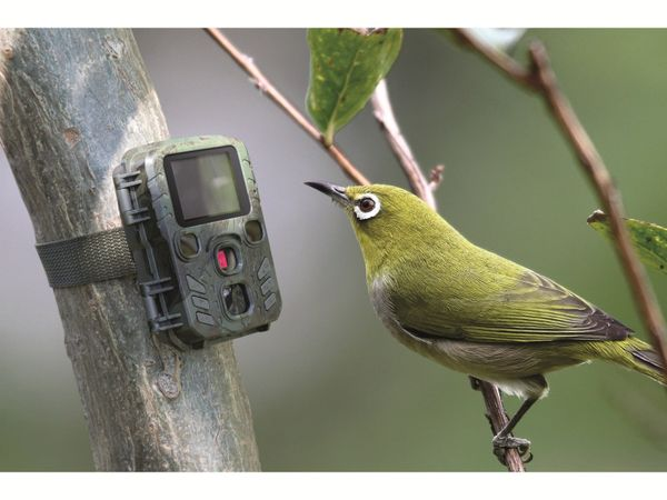 Wildkamera TECHNAXX TX-117 - Produktbild 7