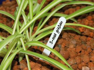 Pflanzen-Etiketten