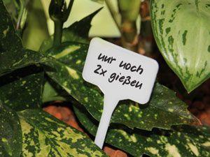 Pflanzen-Stecker
