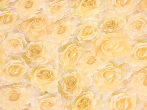Transparentpapier HEYDA 20-4879450, Rosen creme - Produktbild 2