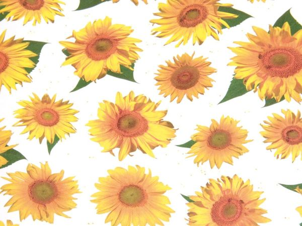 Transparentpapier HEYDA 79327, Sonnenblume - Produktbild 2
